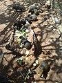 Mamíferos desconocidos en el Zoofari, Cuernavaca, Morelos.jpg