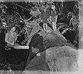 Man cutting through felled kauri stump (AM 88390-1).jpg
