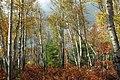 Marion Brooks Natural Area (6) (8064508025).jpg