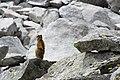 MarmottaBrenta.jpg
