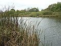 Martins Pond - geograph.org.uk - 1040775.jpg