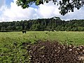 Meadow by the Erme - geograph.org.uk - 1411279.jpg