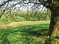 Meadows in a wood - May 2012 - panoramio.jpg