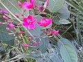 Meccah)Jorhum st)Florist - panoramio.jpg