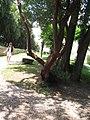 Medieval garden (Perugia) 33.jpg