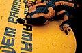 Mem pamal salamandre.jpg