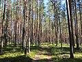 Metsatee Eesti lõunapiiril - panoramio.jpg