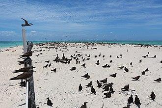 Michaelmas and Upolu Cays National Park - Michaelmas Cay