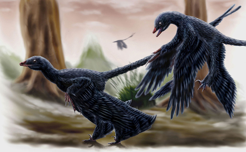 Microraptor by durbed