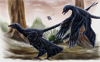 Microraptor - Restoration of two individuals by the ground