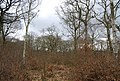 Mixed woodland, North Bishopden Wood - geograph.org.uk - 1209801.jpg