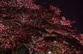 Mogusa, Hino, Tokyo 191-0033, Japan - panoramio (2).jpg