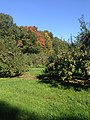 Mont-Saint-Bruno Orchard in Early Autumn.jpg