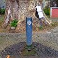 Monte, Funchal, Madeira - 2013-01-06 - 85589389.jpg