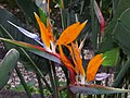 Monte Palace Tropical Garden DSCF0118 (4642260863).jpg