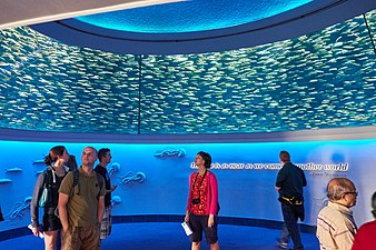 Visitors stand in a tall room underneath sardines swimming in a circle around them