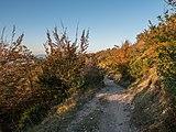 Montes de Vitoria - Camino al Pagogan 01.jpg