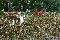 More roses 01.jpg