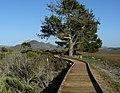 Morro bay state park marina boardwalk.jpg