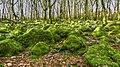 Moss (49593736156).jpg