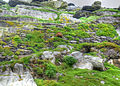 Mossy stairs (8045582141).jpg