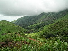 Mount Nimba Strict Nature Reserve-123989.jpg