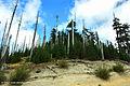 Mount St. Helens National Volcanic Monument, Washington (23024686000).jpg