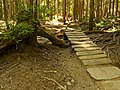 Mt Fromme - Upper Griffen trail.jpg