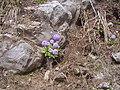 Mukeshpuri track flower.jpg
