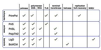 Primase - Image: Multifunctional primases figure