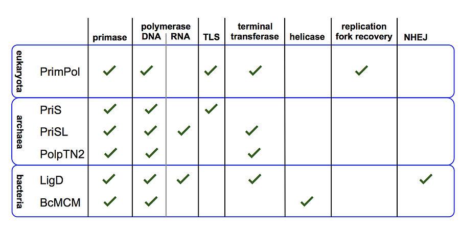 Primase - Wikipedia