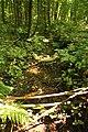 Munkbosbeekvallei 08.jpg