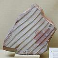 Museo de La Plata - Ondulita, Estructura sedimentaria.jpg