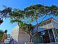 Museo de arte del tolima.JPG