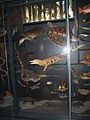 Museumfür NaturkundeBiodiversität (3).jpg