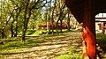 Mustang Lovasclub, Paradicsomsziget, Dunaharaszti, Hungary - panoramio (11).jpg