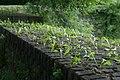 Muurbegroeiing op de Menenpoort te Ieper - 370761 - onroerenderfgoed.jpg