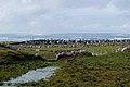 Mweenish Island - panoramio (3).jpg