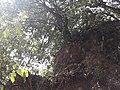 Nagarjun- shivapuri national park 20190316 112837.jpg