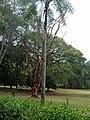 Nairobi Arboretum Park 18.JPG