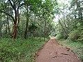 Nairobi Arboretum Park 36.JPG