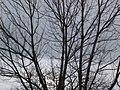 Naked tree (4169978610) (2).jpg