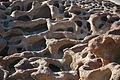 Namibie Namib Naukluft Park 12.JPG