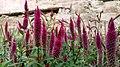 National Botanical Garden of Georgia (HDR Photo, Lg G19) باغ بوتانیکال، شهر تفلیس.jpg