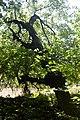 Naturschutzgebiet Haseder Busch - Im Haseder Busch (18).jpg