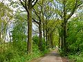 Natuur nabij Asterdplas DSCF6815.jpg