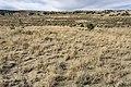 Near La Guzpa Canyon - Flickr - aspidoscelis.jpg