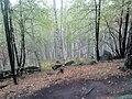 Nevyanskiy r-n, Sverdlovskaya oblast', Russia - panoramio (143).jpg