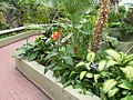 New York Botanical Garden 38.jpg
