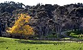 New Zealand - Rural landscape - 9992.jpg